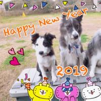 新年のご挨拶と、新家族紹介