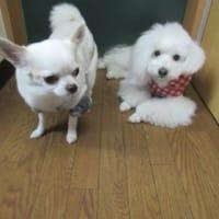 20/02/13 犬の幼稚園BuddyDog
