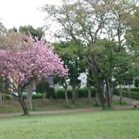 春雷と虹、そして桜