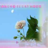 『 ちっご風起こす情(こころ)に酔芙蓉 』瘋癲老仁妄句34-02hsr3002
