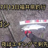 2020年7月13日福井県で魚釣り。
