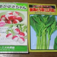 女池菜の種
