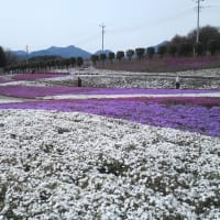 春!まっさかり