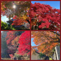 秋の京都🍁その3
