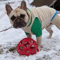 犬逆ソリ~雪中キャンプ最後の〆のポーズ