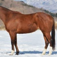 アポロフィオリーナ(繁殖牝馬)