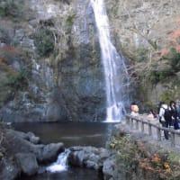 2018年12月5日(水) 箕面の森(大阪府箕面市 )