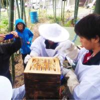 日本蜜蜂って?