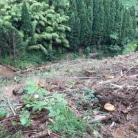 スインヤーダで林地残材を搬出
