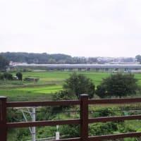 綾瀬神崎遺跡公園見学