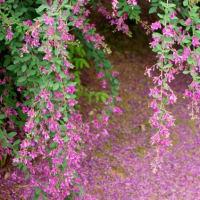 たのしい万葉集 萩の花咲きのををりを・・・