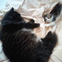リアル猫会議
