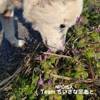[迷い犬]白ちゃん旅立つ…