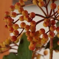 実物盆栽の季節に