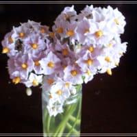観賞に堪えうる花