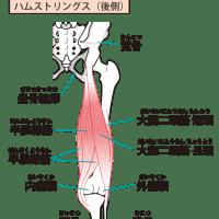 太腿裏の筋肉その3