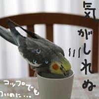 俳句の日・俳句記念日(8月19日)