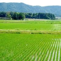 伊勢平野の穀倉地帯