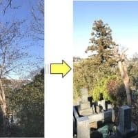 お寺敷地内伸びてきた雑木の枝おろし
