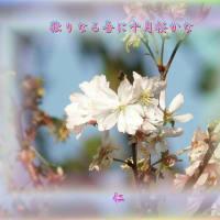 フォト瘋癲老仁妄句97-04『 独りなる吾に十月桜かな 』hsm12