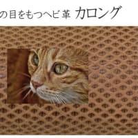 フィッティングウォレット『キャッツアイ Cat's-eye(カロング)』3色、お得な予約販売は3月31日まで