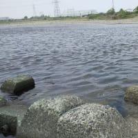 2020/06/05 メトロリバー「ハラスメントポイント...コイしか釣れないヨ」の巻