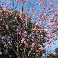 我が街中歩・春の打上川治水緑地(ⅰ)