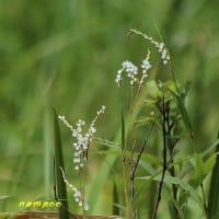 樫原湿原と周辺の植物(4)
