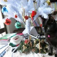 クリスマスツリーを出しました