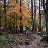 井頭公園のカワセミ(2)