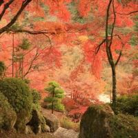 京都-三室戸寺