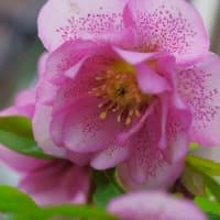 ●我が家の2月の花(14)コラージュ