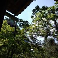嵐山の新緑