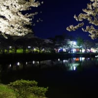 夜桜見物!