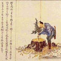 【江戸期飛騨「材木伐り出し」村落収入 年間1000万円?】