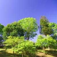 初夏の和束運動公園