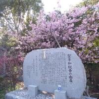 河津桜とパワースポット