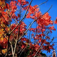 わざわざ紅葉観光地に行かなくても・・・身近な自宅、山の家にも紅葉が映えています。