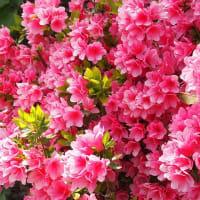 晩春から初夏へ花咲く散歩道