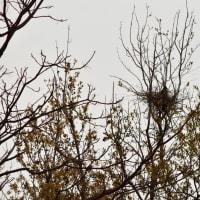 2020年 春 ② 野鳥 シジュウカラ・ツグミ・メジロ・アオサギ