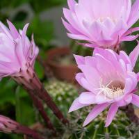 2021.5.16 庭の花(近所も含む)