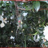初冬の蜘蛛さん