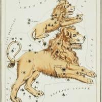 ライオンは、ねぐらからでなければならない。