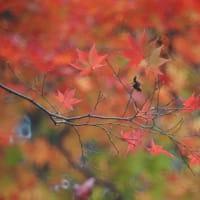 紅葉のある風景@2020/11/23 。。。