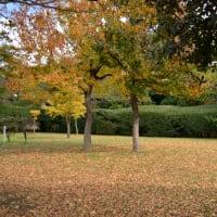 大濠公園周辺の紅葉