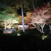 大興善寺の紅葉