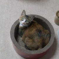 6周年と猫♪