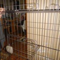 飼い主さんのお家へ,幸運な2匹の野良ネコさんたち