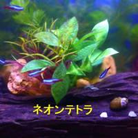 胃腸の調子が・・・&メダカと熱帯魚の混泳