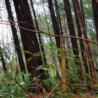 もりもり森で竹パン&竹プリン